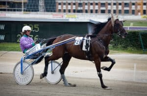 The American Standardbred is one of the most expensive horse breeds in the world