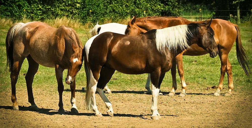 Keeping a horse with other horses will stop them from getting anxious and stressed