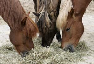 Around 80% of your horse's feed should be forage