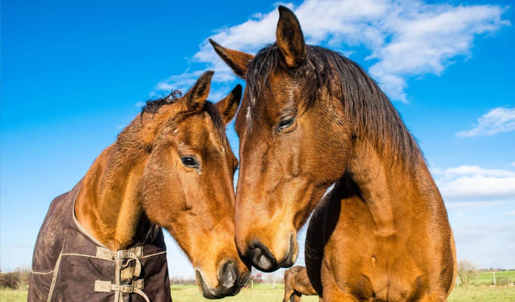 The most friendly horse breeds in the world