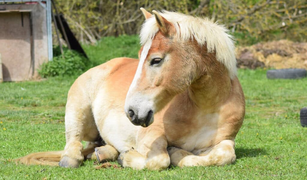 A relaxed and calm horse is a happy horse
