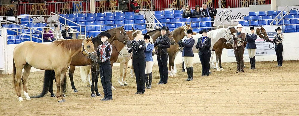 Horses can get nervous in the show ring just as we do