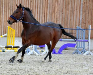 Use a long line when training your horse to load
