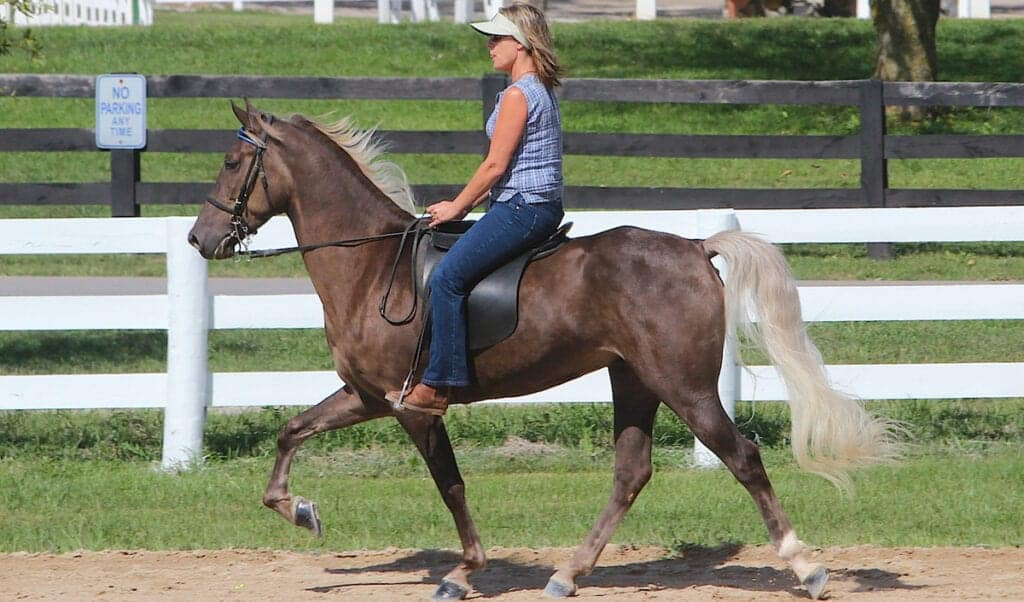 Gaited horses are extremely comfortable to ride