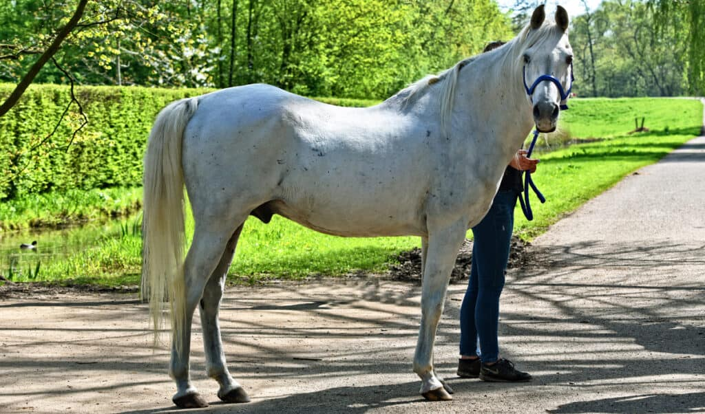 Grooming your horse won't just make him look nice, its good for his healthy too