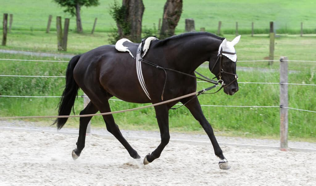 Groundwork exercises that help you improve your horse's suppleness and balance