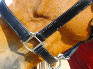 Most horse halters have some metals parts