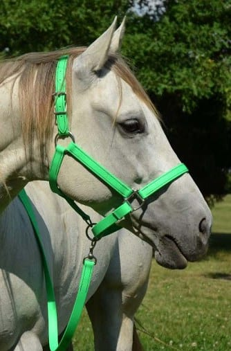 Nylon halters are strong and durable and come in a range of colors to match your horse's personality (and your tastes)