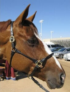 Roller leather horse halters are similar in style to rope halters