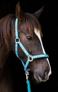 Nylon halters can be personalized for each horse