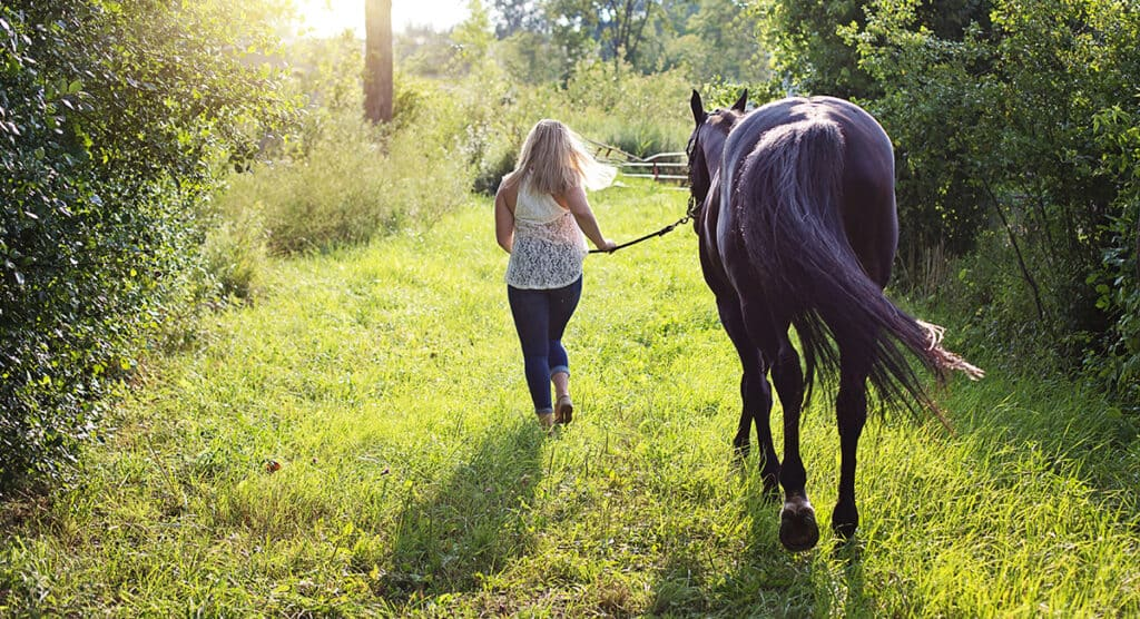 Taking your horse for a walk can be a great way of bonding