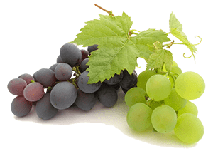 All grapes (regardless of their color) are ideal for horse to eat