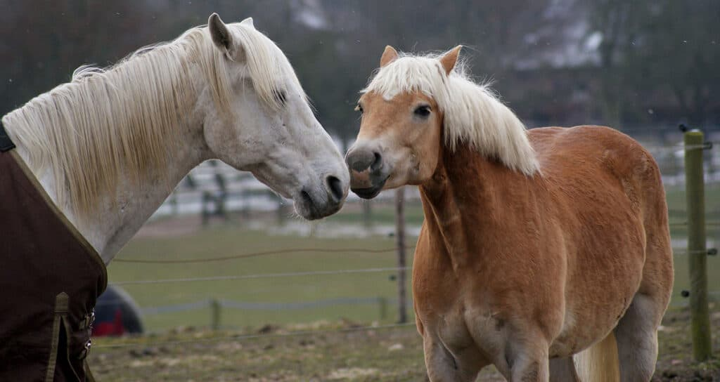 Loneliness in horses can be a cause for so many vices