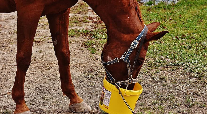 Lack of vitamins and minerals can be a cause for a horse windsucking
