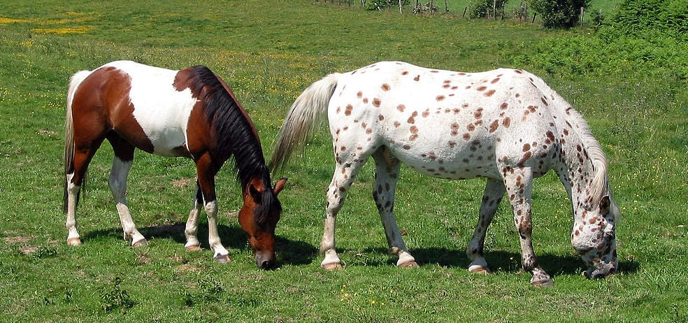 What's the best horse breed for you