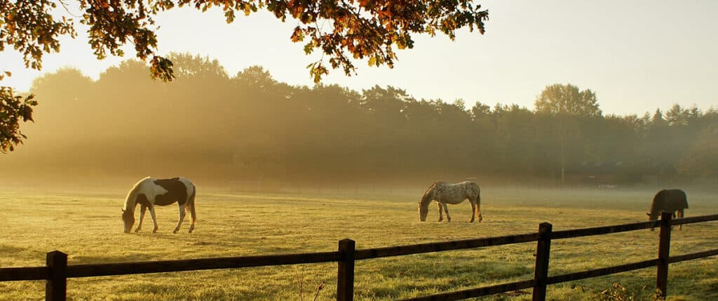 Keeping your horse turned out can really cut the cost of ownership