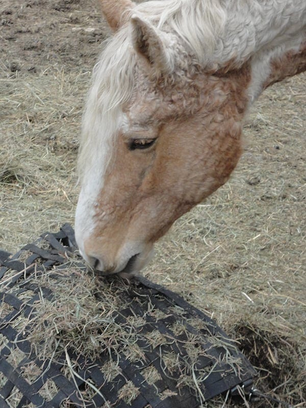 Slow feeders or haulage nets can slow down the speed with which your horse eats
