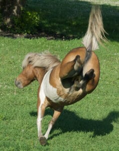 Horses are more likely to give you a warning before they actually kick