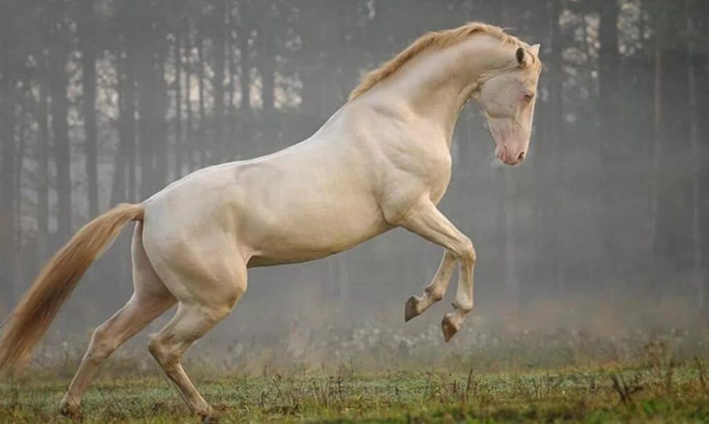 By time a horse reaches the age of 6 he's over 25 in human years
