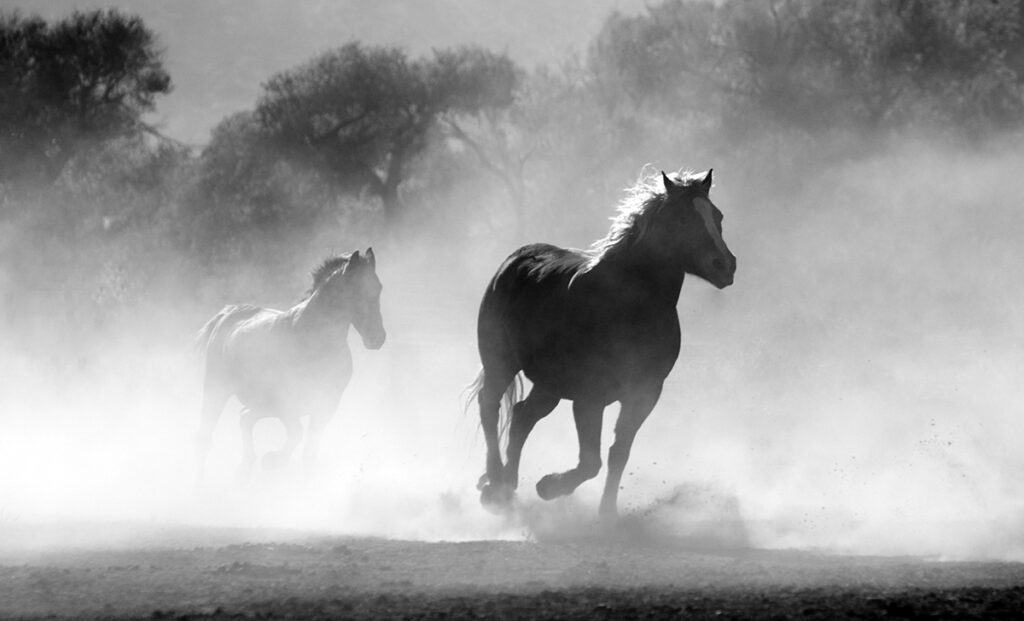 Even a single horse can find its way home again without the travelling as part of a herd