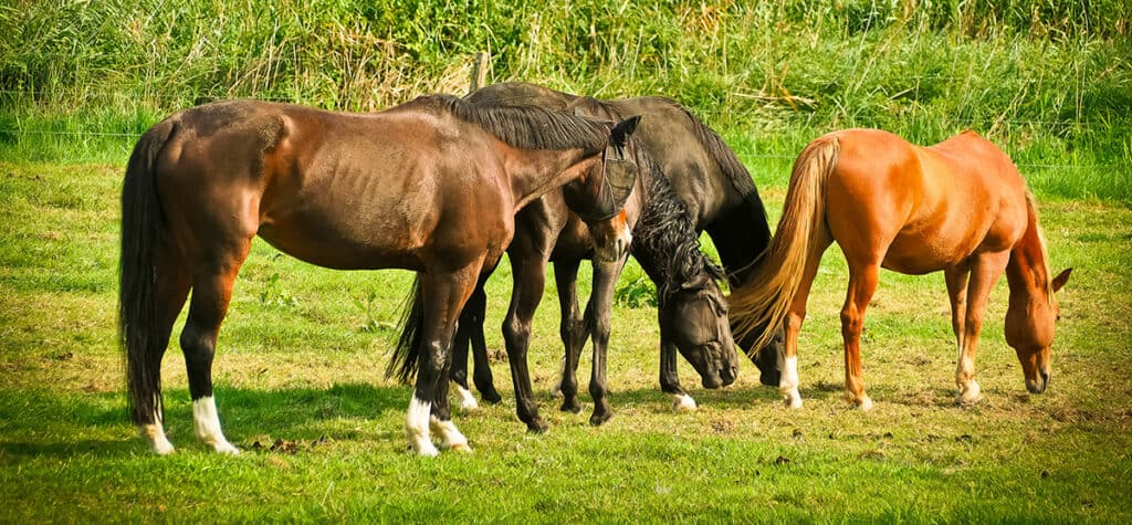 Happy horses tend to live longer than unhappy ones