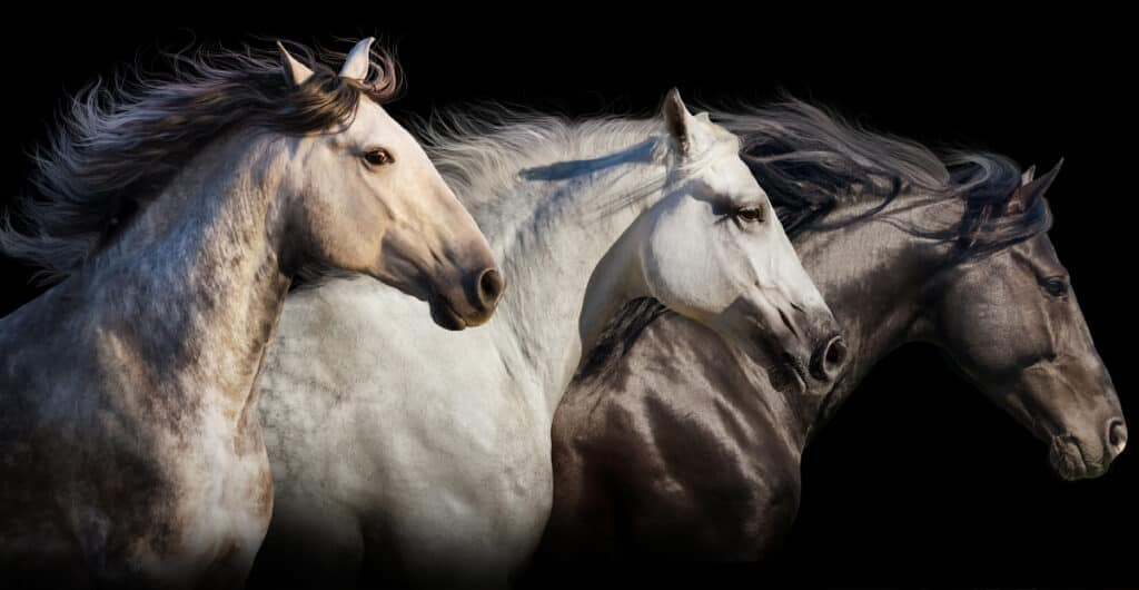 On average horses live for 25 to 30 years