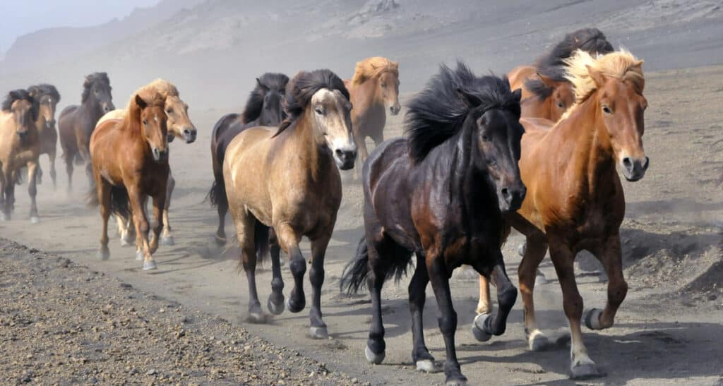 Horses have their own GPS and can find their own way home
