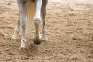 Horses can paw the ground when they'er frustrated
