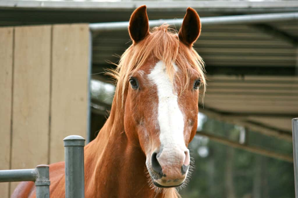 Do horses know their own names? A horse looks alert when you understand you're calling them.