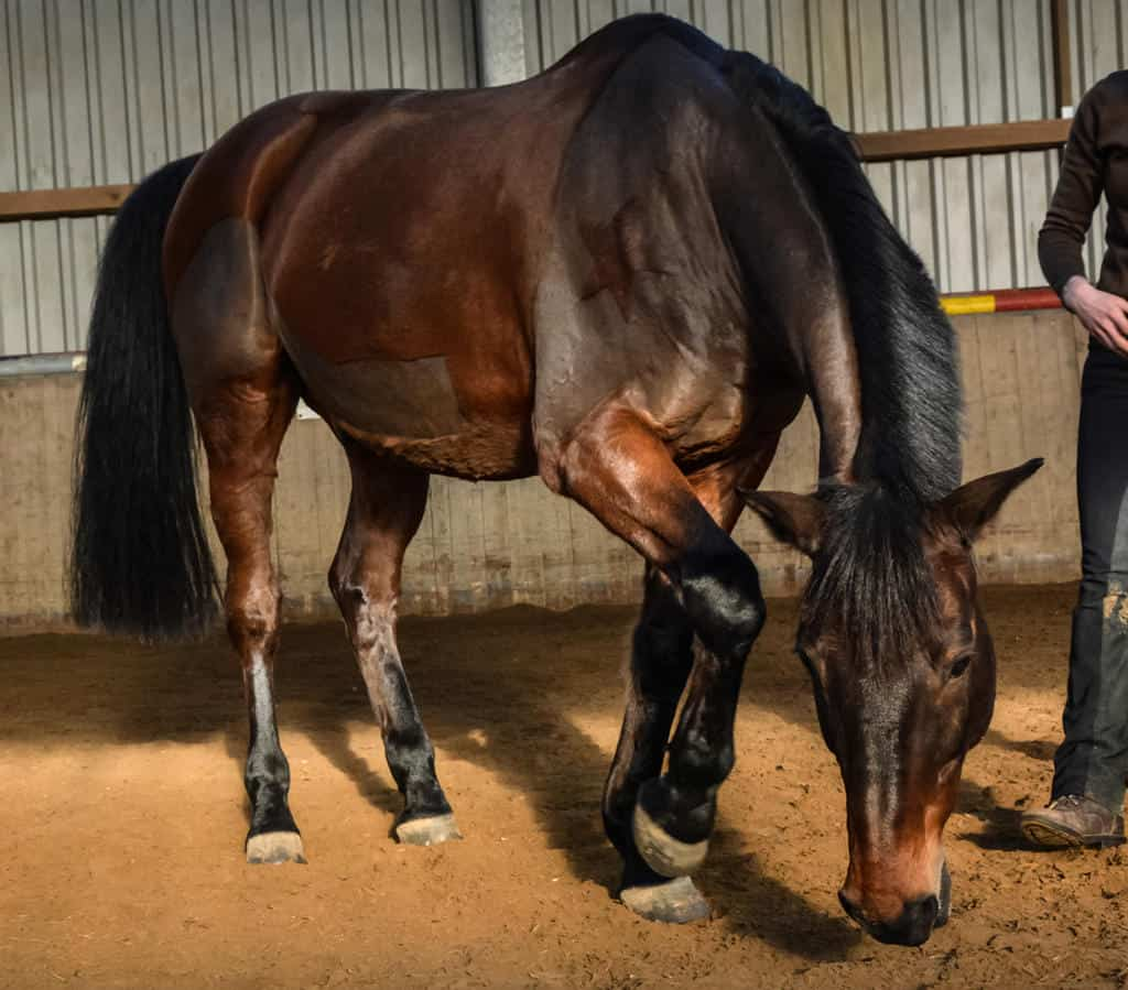 Horses can paw the ground for different reasons