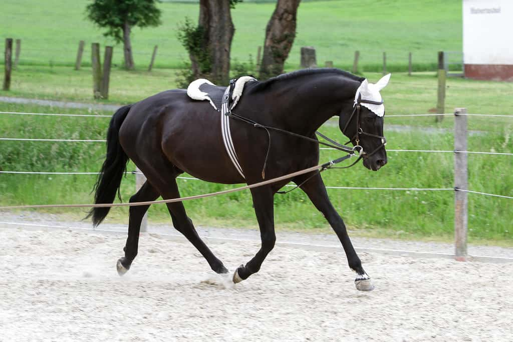 Groundwork will help to stop your horse rearing