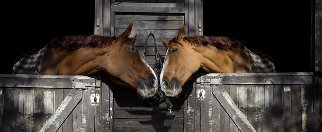 Is leasing a horse better for you than owning one?