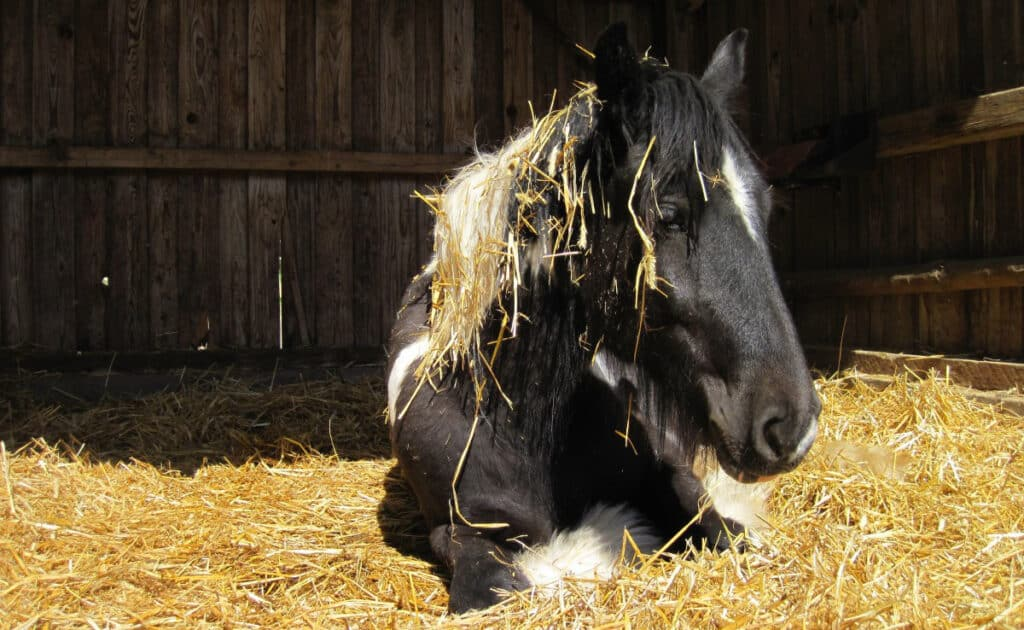 What's the best bedding for allergy prone horses?