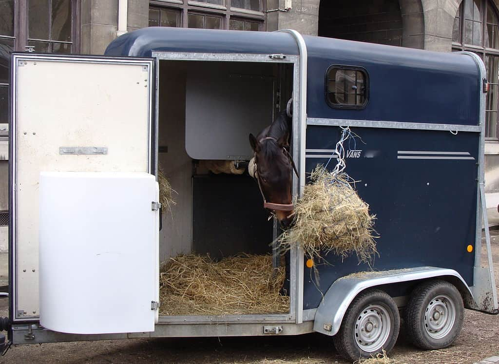 Make regular stops if you're traveling long distances with your horse