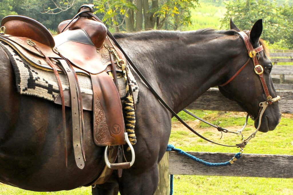 Essential saddle accessories for trail riding