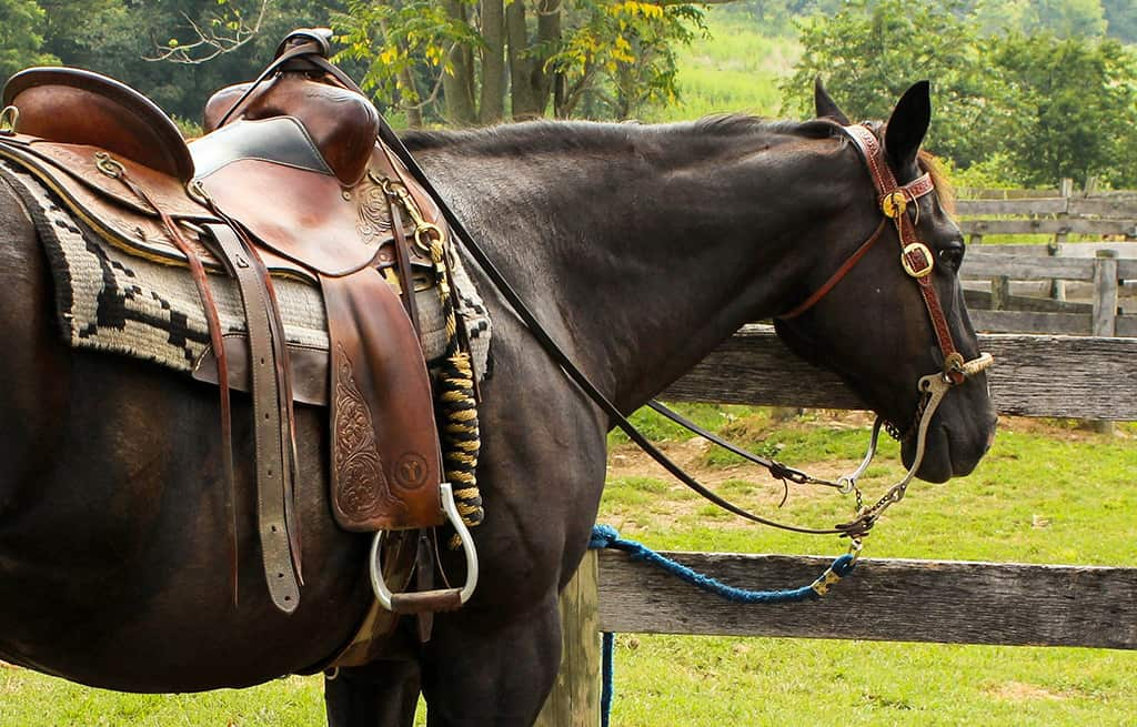 You should clean you saddle properly every month at least