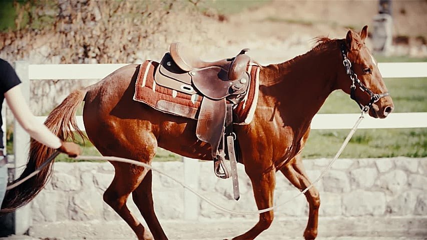 Reintroduce your horse back to work gradually