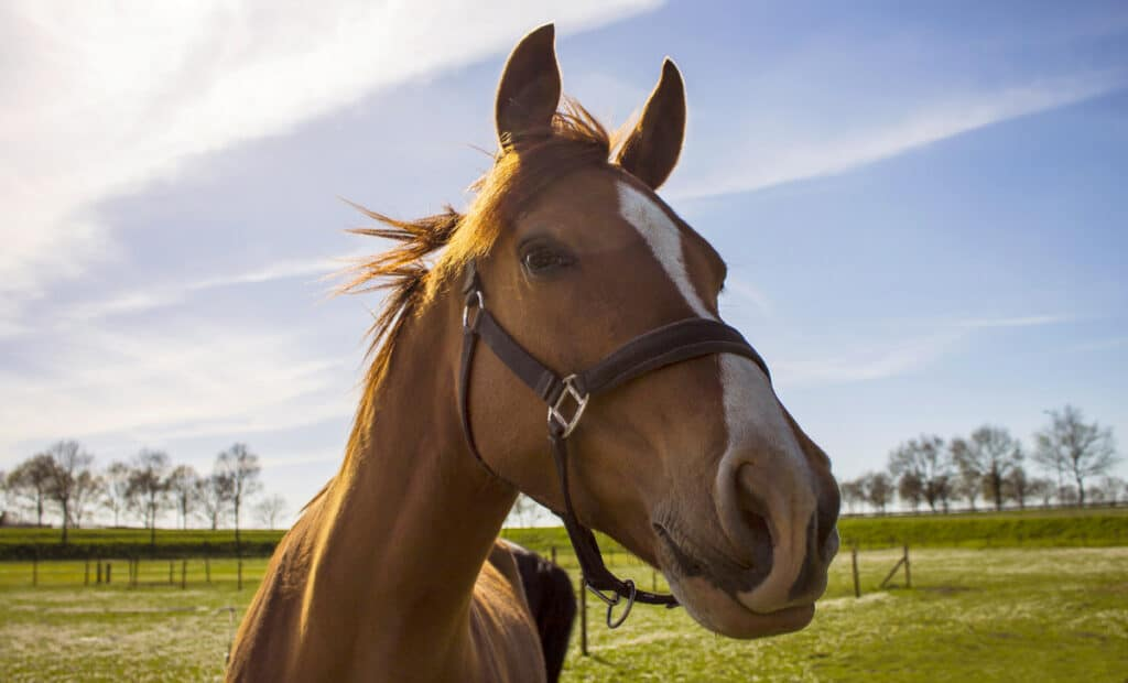 20 Tips to Help You Prepare Your Horse For Spring