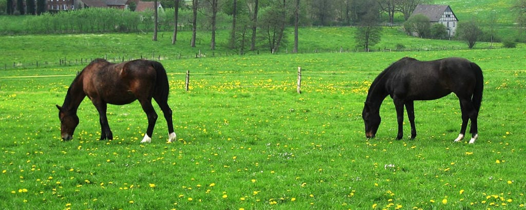 Make sure your paddock is clean ready for spring
