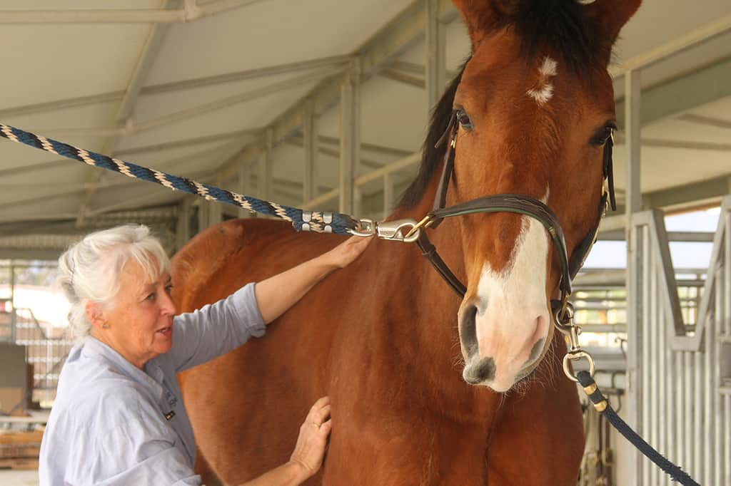 An equine physiotherapist will help to get your horse back to work
