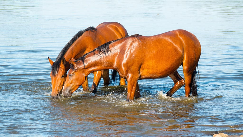 Horse need to have constant access to water