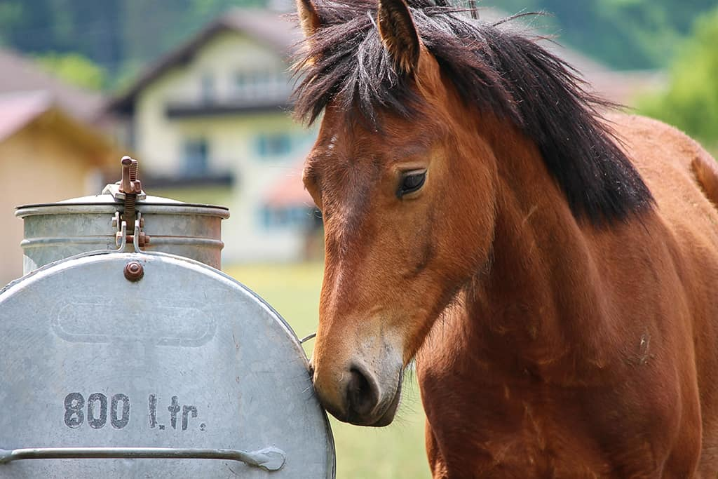 Make sure your horse always has access to water