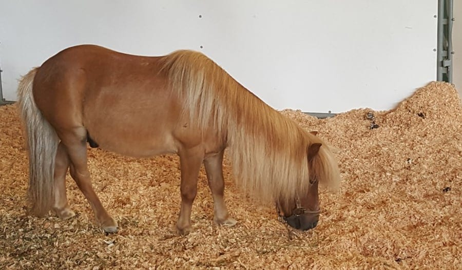 Giving your horse plenty of bedding will help to reduce the chance of him being lame