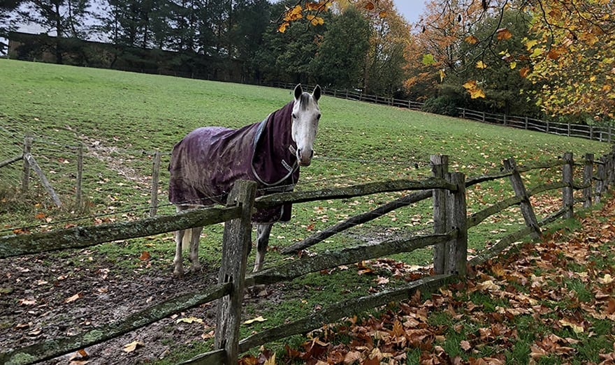 Electric horse fencing with a wooden post and rail fence. Copyright Horse Factbook