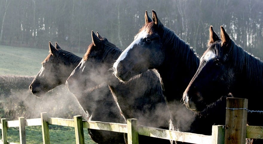 Its important that any horse fencing is safe