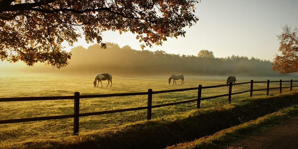 It can be great waking up in the morning, looking out of the window and seeing your horse grazing