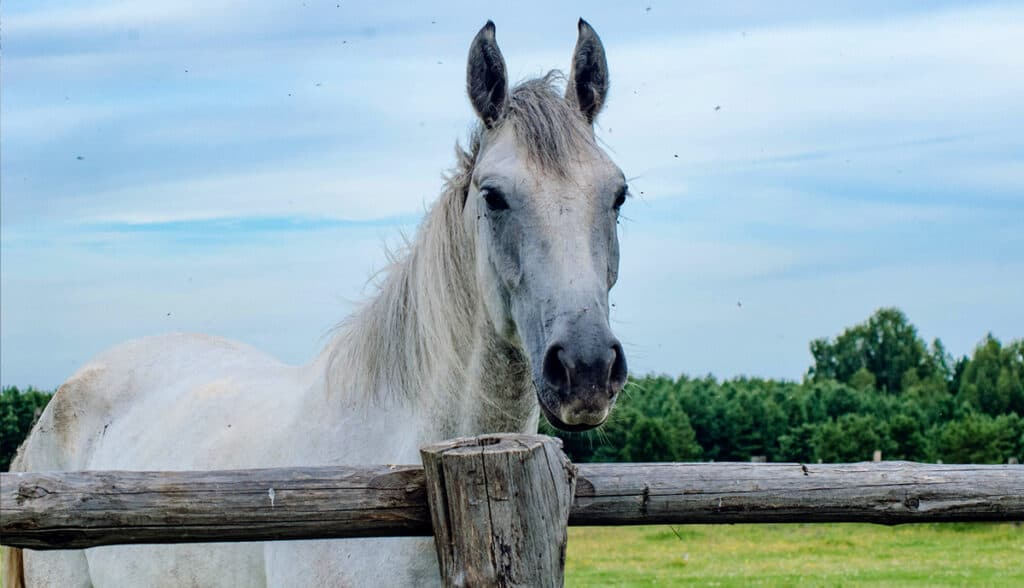 Pros & Cons Of Different Horse Fencing: Which Options Is Best For You?