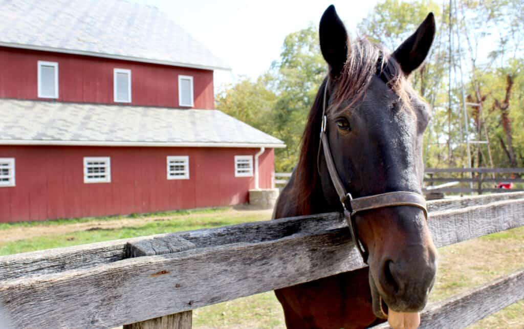 Are you okay keeping a horse in your backyard?