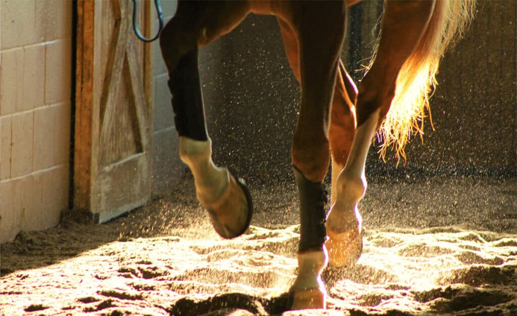 What does it mean when a horse is suffering from lameness?