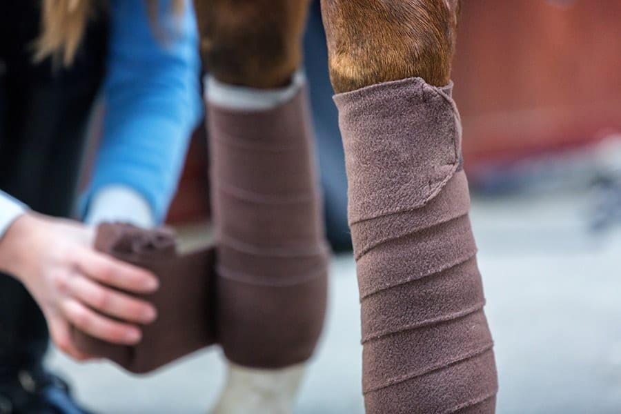 Protecting your horse's legs during exercise will help to reduce the risk of lameness